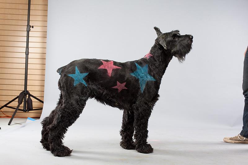 Paint Paint Star Dog