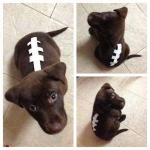 Football Dog Costume