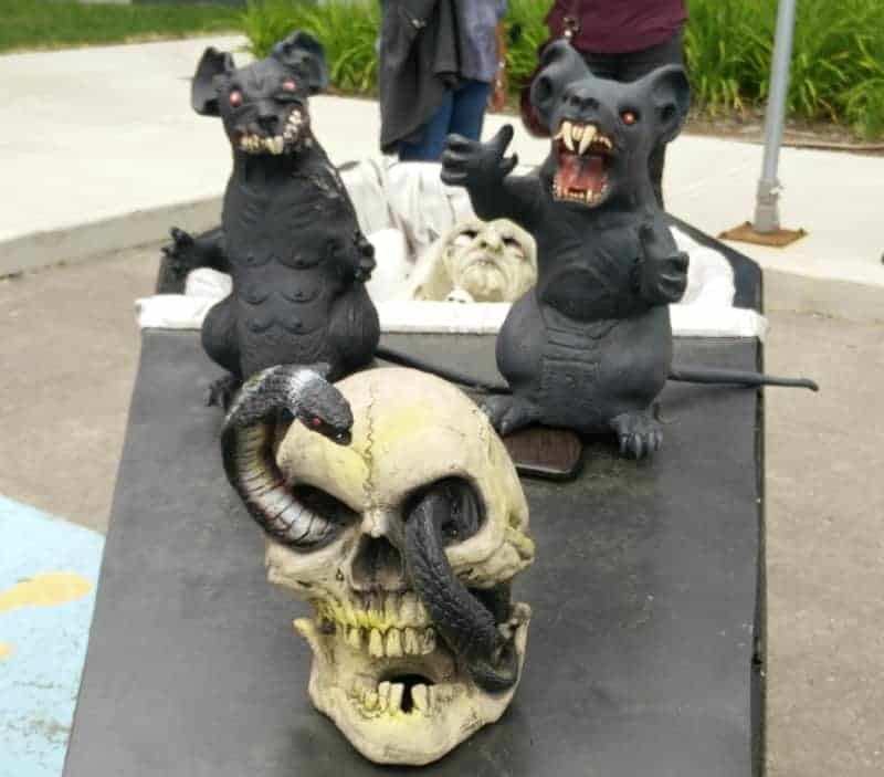 Rodents and Skull