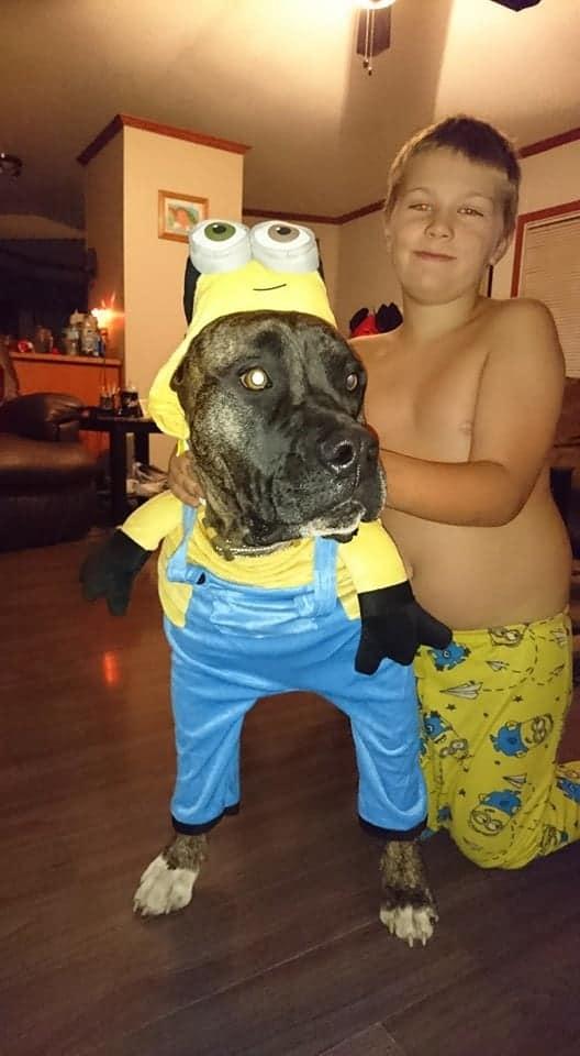 Halloween Alley Minion Dog