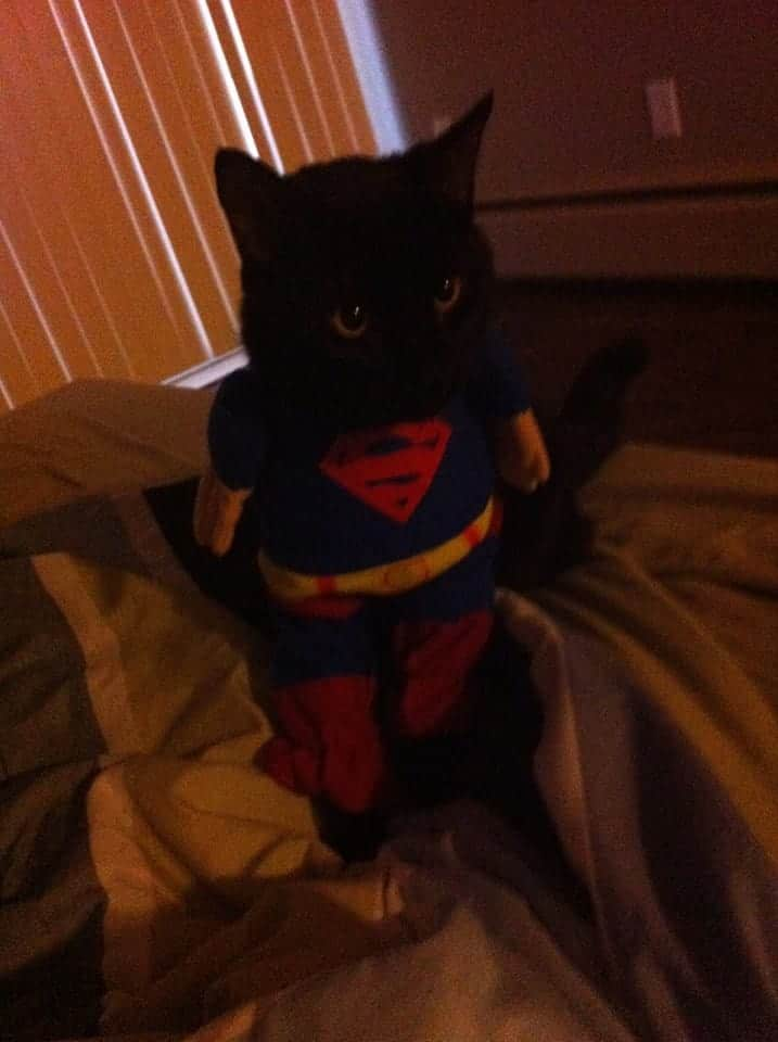 SuperMan Cat Costume