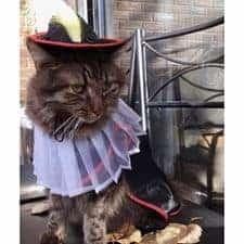 Puss in Boots Costume Cat