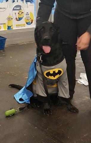 Halloween Batman costume for big dogs