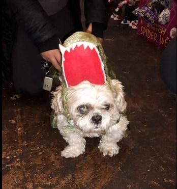 Halloween Aligator Costume For Dogs