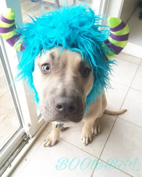 Halloween Boo Costume For Dogs