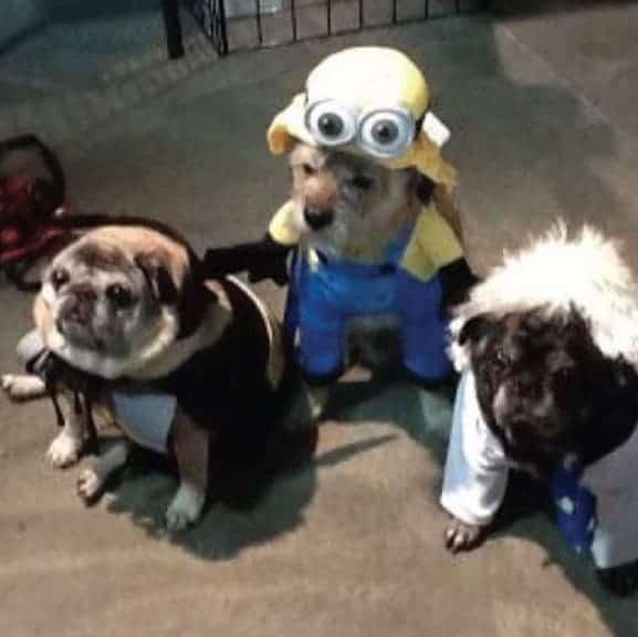 einstein dog costume