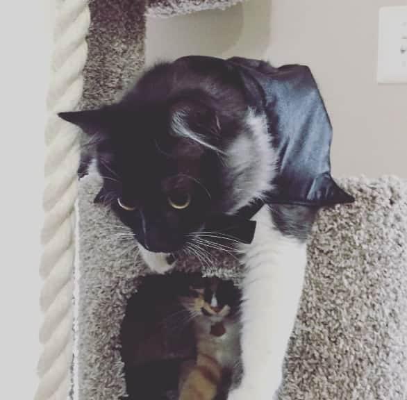 Batman costume for cats