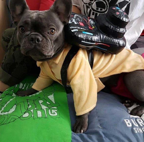 Halloween Ghostbuster Dog Costume