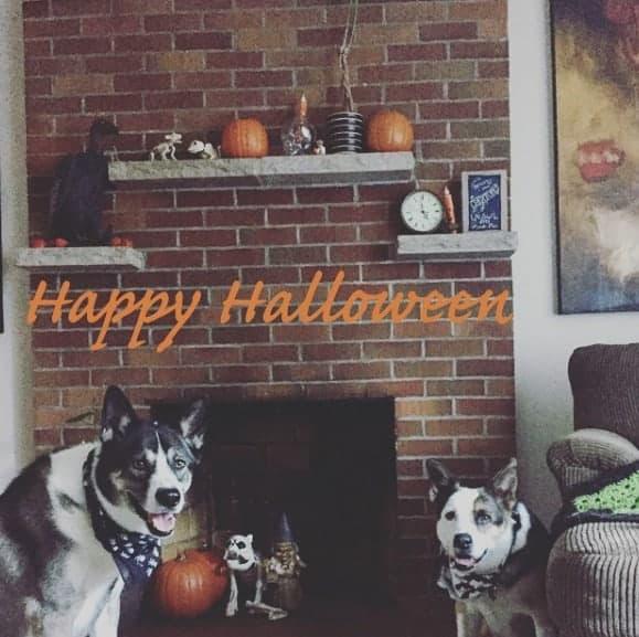 Halloween Costume Dog Decpration