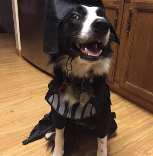 Halloween Costume Dogs 6