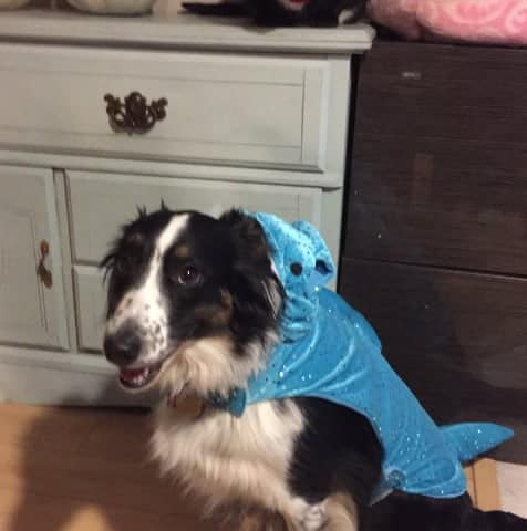 Shark Costume Dog
